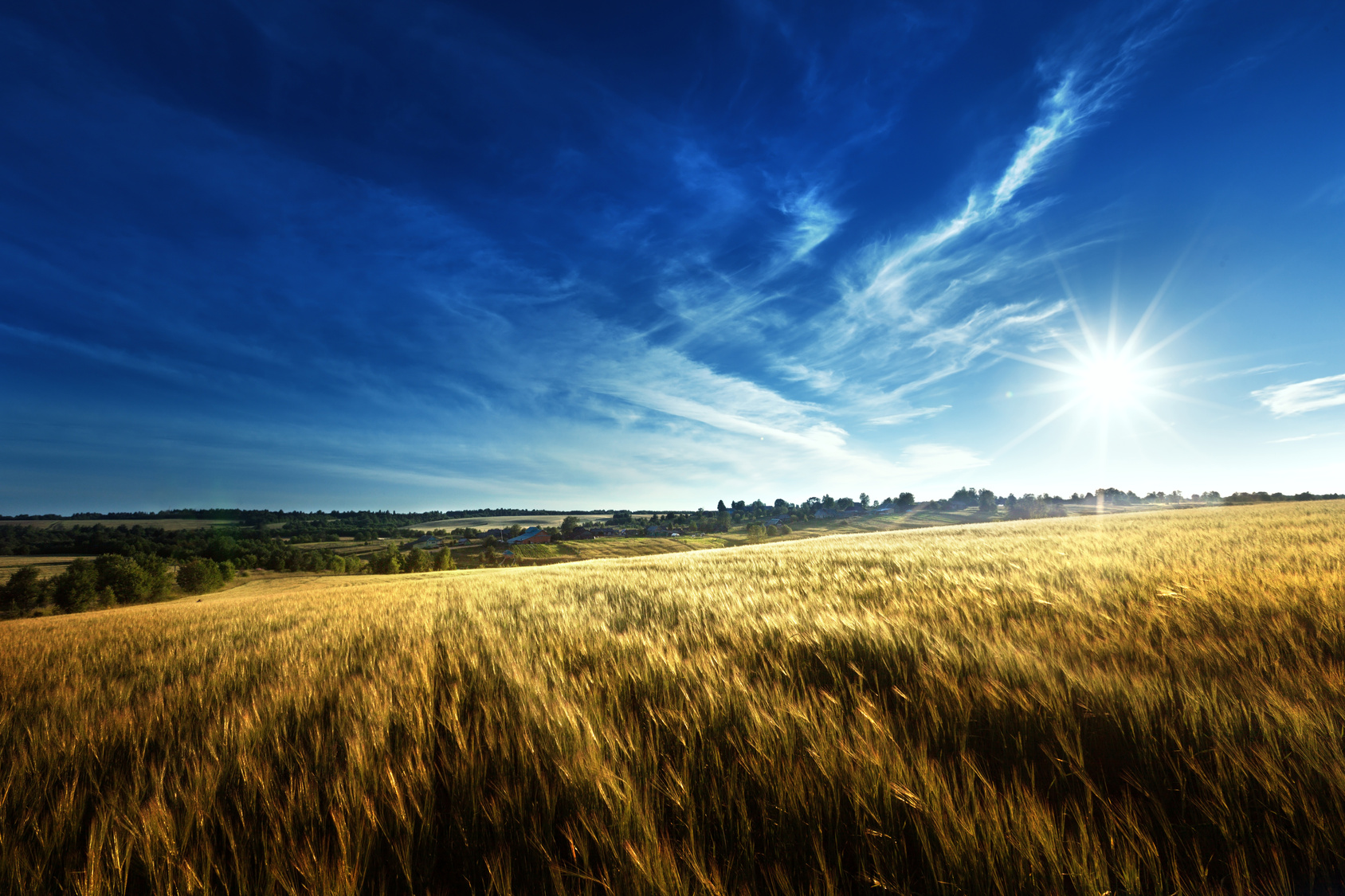Controlling moisture is critical in the production of top-quality wheat and other grains.