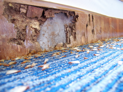 Damage Caused by termites