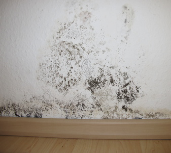 Mold is not only ugly to look at, but it poses a serious health risk to a building's occupants.