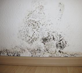 Interior wall mold