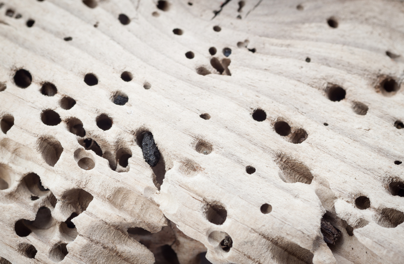 Termites can destroy a piece of wood with incredible speed. Other insects can prove to be a nuisance as well.