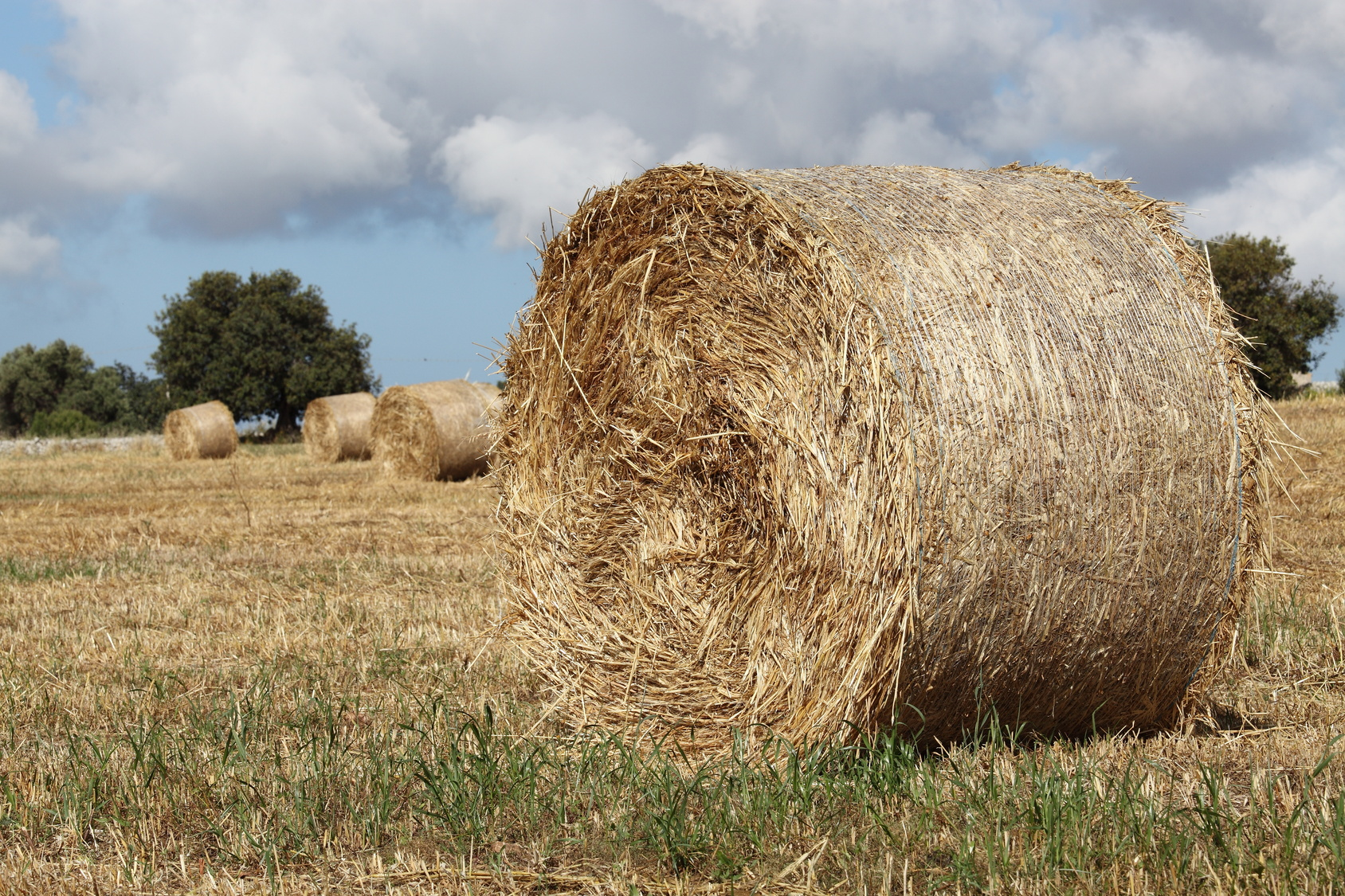 Making hay isn't always as simple as cutting it and shaping it into a bale.
