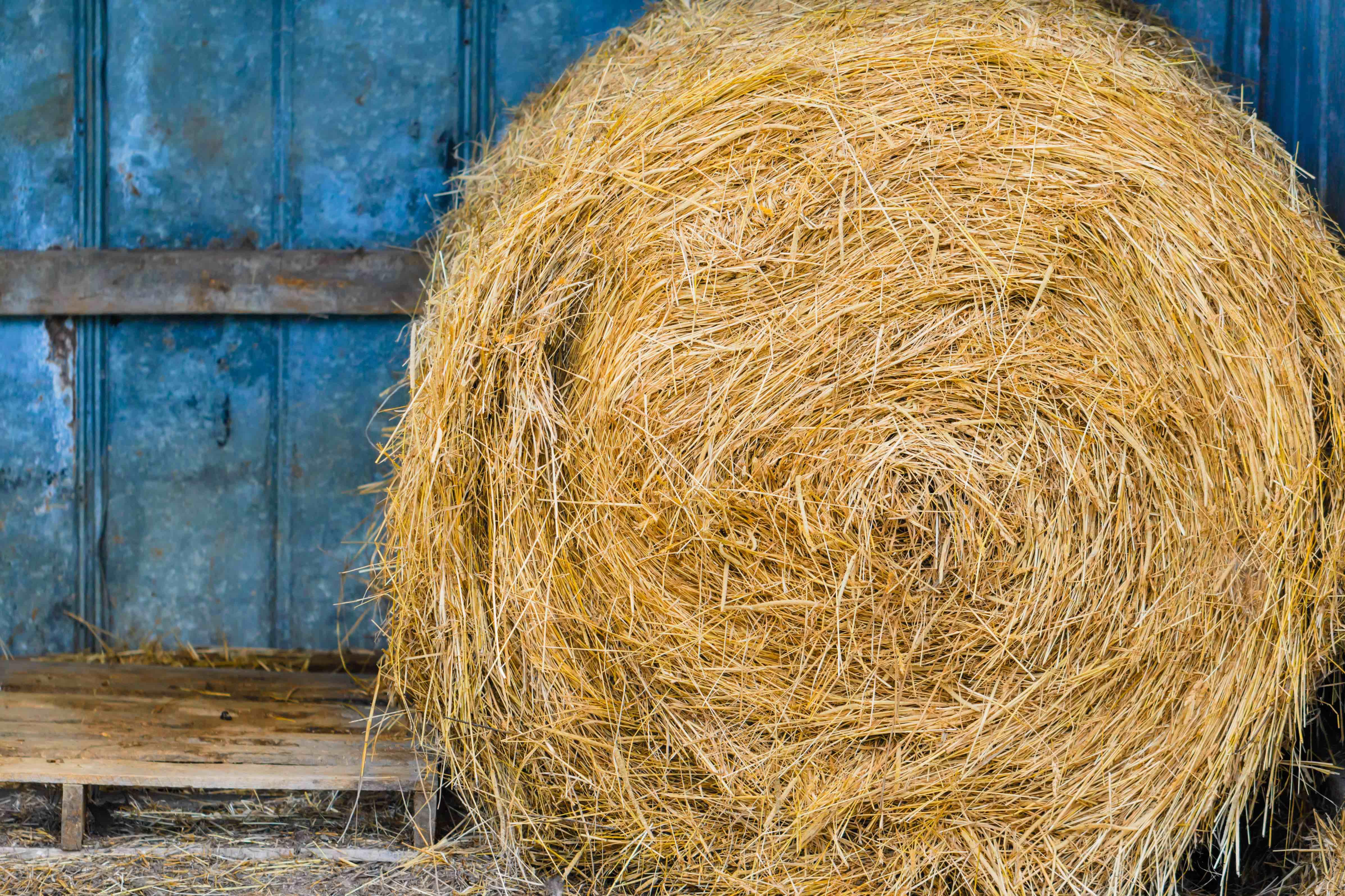 Measuring Moisture in Hay vs. Grain