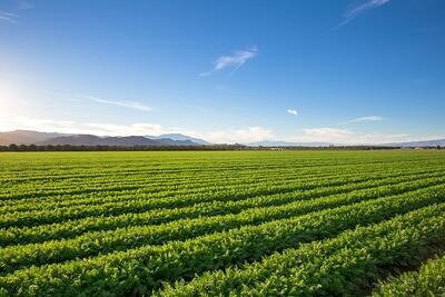 Preventing the Negative Effects Moisture Can Have On Agriculture-083208-edited