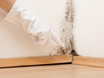 determine mold risk
