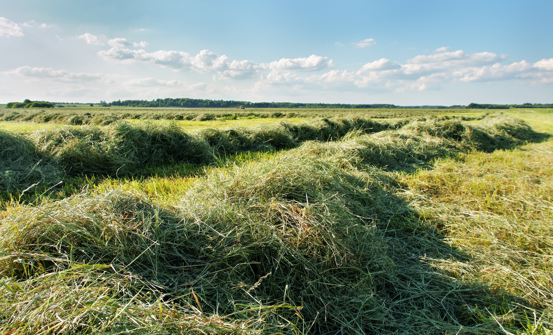 measuring moisture in fresh-cut hay in the windrow is very different from measuring moisture in a bale.